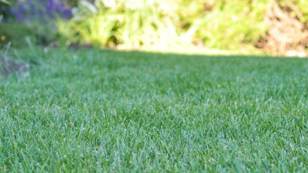lawn-garden-001